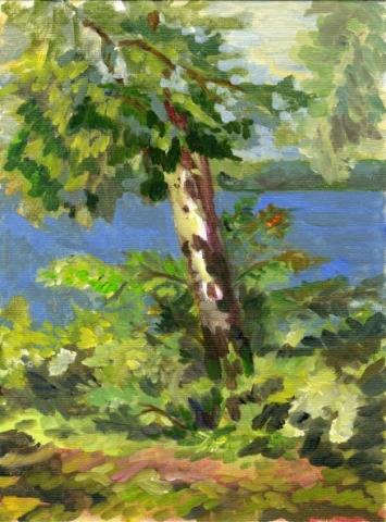 """Birch Tree - 9"""" x 12"""" - Oil on Board"""